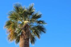 与蓝天的棕榈树 免版税库存图片