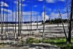 与蓝天的森林地区 免版税库存照片