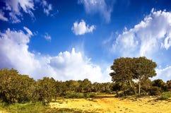 与蓝天的沙漠沙子 免版税图库摄影