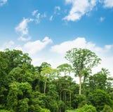 与蓝天的热带雨林风景 免版税库存照片