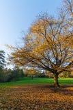 与蓝天的秋天树 库存照片