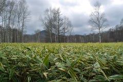 与蓝天的草原风景 库存照片