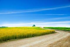 与蓝天的草地风景 免版税库存图片