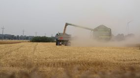 与蓝天的金黄麦田在收获期间的背景,波兰, 08中 2014年, 库存图片