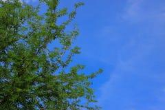 与蓝天的绿色树Brances框架角落 免版税库存照片