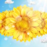 与蓝天-秋天的向日葵 10 eps 库存照片