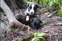 与蓝眼睛的两只小狗在木头 图库摄影