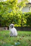 与蓝眼睛的小的猫 免版税库存照片
