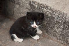 与蓝眼睛的美丽的小的小猫 图库摄影
