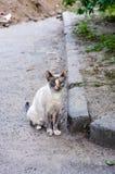与蓝眼睛的街道猫 一只离群猫 图库摄影