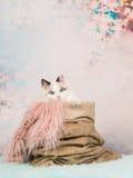 与蓝眼睛的逗人喜爱的小猫在浪漫柔和的淡色彩的一个粗麻布大袋上色了背景 库存照片