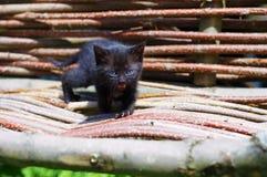 与蓝眼睛的黑小猫在木椅子 免版税库存图片