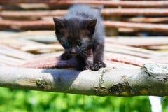 与蓝眼睛的黑小猫在木椅子 免版税库存照片