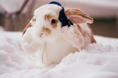 与蓝色冬天帽子的兔子 库存照片