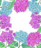 与蓝色和桃红色八仙花属的垂直的横幅在白色背景开花 化妆用品的花卉设计,香水,秀丽关心produ 库存照片
