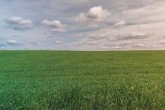 与蓝色多云天空和清楚的领域的五颜六色的明亮的完善的晴朗的绿色领域风景 库存图片