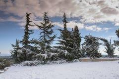 与蓝色多云天空的斯诺伊树 免版税图库摄影