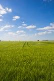 与蓝色多云天空的美好的风景甜玉米领域 免版税图库摄影