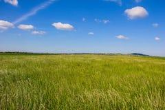 与蓝色多云天空的美好的风景甜玉米领域 图库摄影
