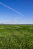 与蓝色多云天空的美好的风景甜玉米领域 免版税库存照片
