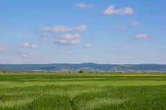 与蓝色多云天空的美好的风景甜玉米领域 库存图片