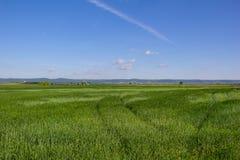 与蓝色多云天空的美好的风景甜玉米领域 库存照片