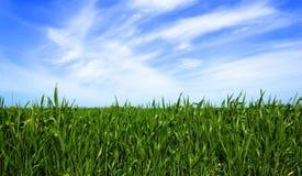 绿色草坪背景 免版税库存照片
