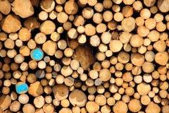 与蓝色油漆的两本木材日志在堆 免版税库存照片