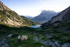 与蓝色湖的山景日出和绵羊的 库存照片