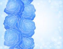 与蓝色玫瑰和明亮的sp的美好的背景 免版税库存照片