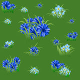 与蓝色矢车菊和草的花卉无缝的样式 图库摄影