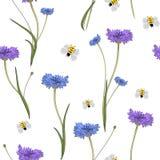 与蓝色矢车菊的无缝的样式在白色 库存图片