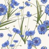 与蓝色矢车菊的无缝的样式 免版税库存照片