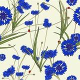 与蓝色矢车菊的无缝的样式 库存照片