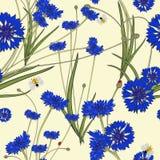 与蓝色矢车菊的无缝的样式 免版税库存图片