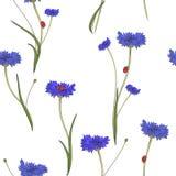 与蓝色矢车菊的无缝的样式 库存图片