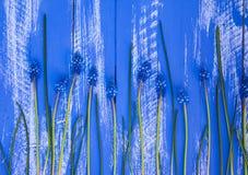 与蓝色花和词根的蓝色木背景 库存照片