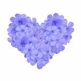 与蓝色花的心脏 库存照片