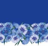 与蓝色花的无缝的花卉边界 免版税库存图片