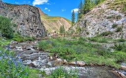 与蓝色花的晴朗的夏天山风景在河附近 免版税图库摄影