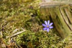 与蓝色花的风景在背景中 库存图片