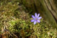 与蓝色花的风景在背景中 免版税库存照片