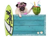 与蓝色葡萄酒木海滩标志、冲浪板和夏天西瓜鸡尾酒的哈巴狗狗,隔绝在白色背景 库存照片