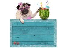 与蓝色葡萄酒木海滩标志和西瓜鸡尾酒的哈巴狗狗,隔绝在白色背景 免版税库存图片