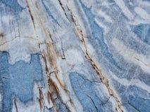 与蓝色颜色的木石化 免版税库存照片
