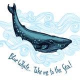 与蓝鲸的逗人喜爱的例证 免版税库存照片