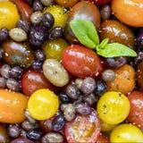 与蓬蒿的蕃茄和橄榄沙拉 免版税图库摄影
