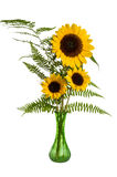 与蕨和向日葵的花的布置 库存图片