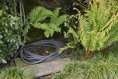 与蕨和水管的庭院斑点 库存照片