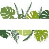 与蕨和monstera叶子的热带背景 图库摄影